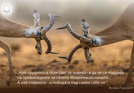 motivator_091_bg